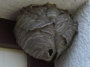 180806 – Insektenbekämpfungen